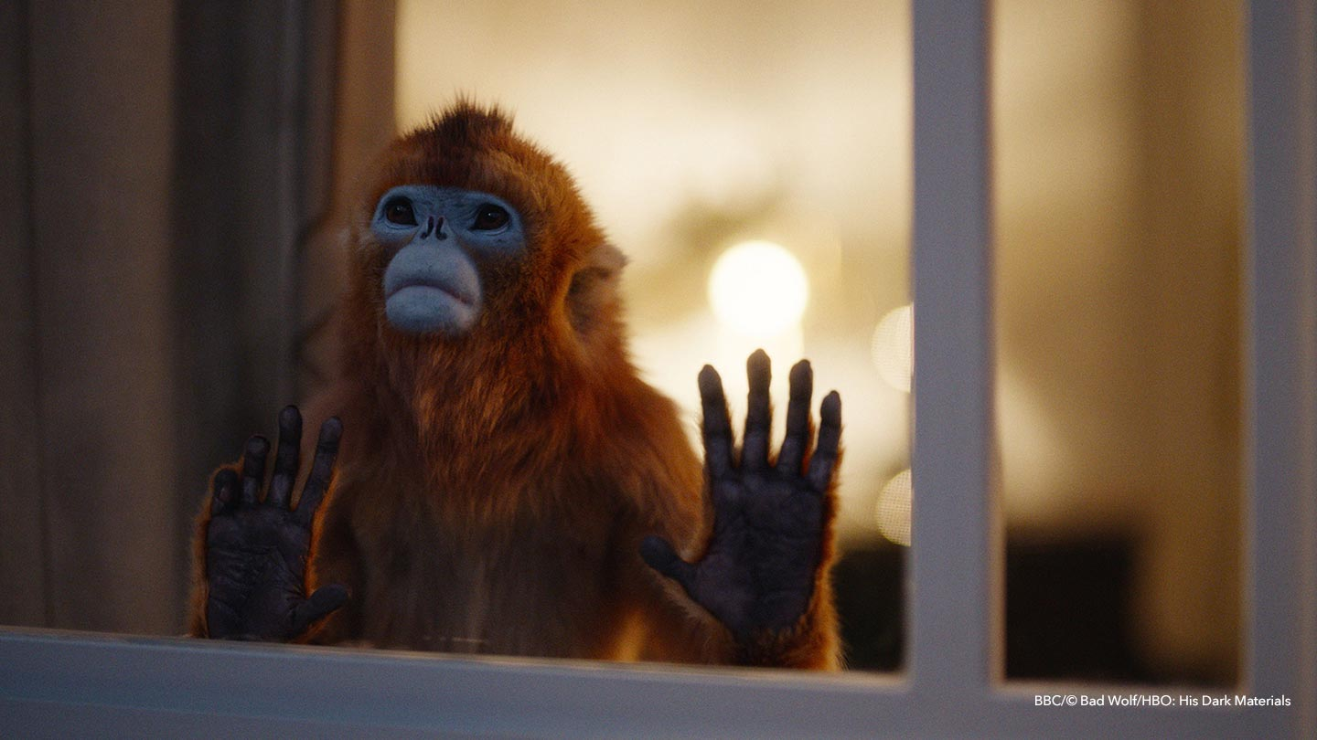 Golden Monkey at Window
