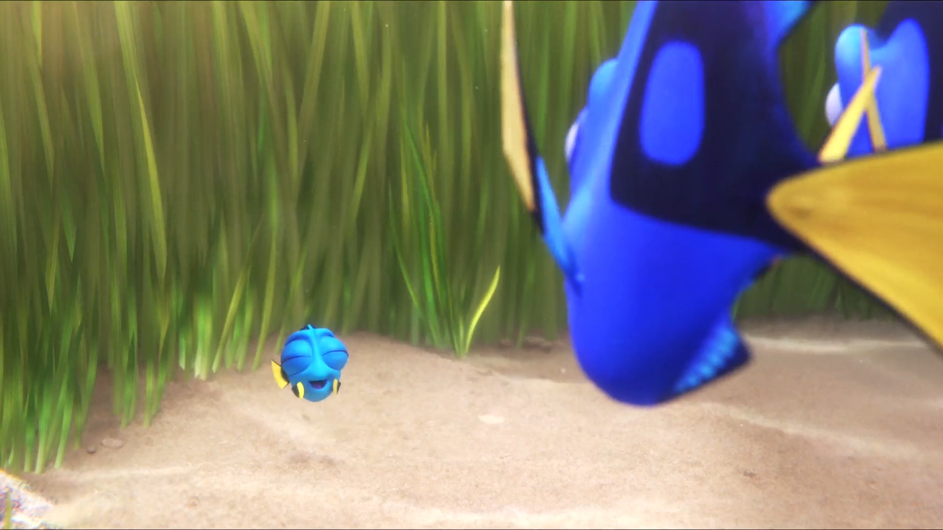 Behind the scenes of Finding Dory and the software that helped make it