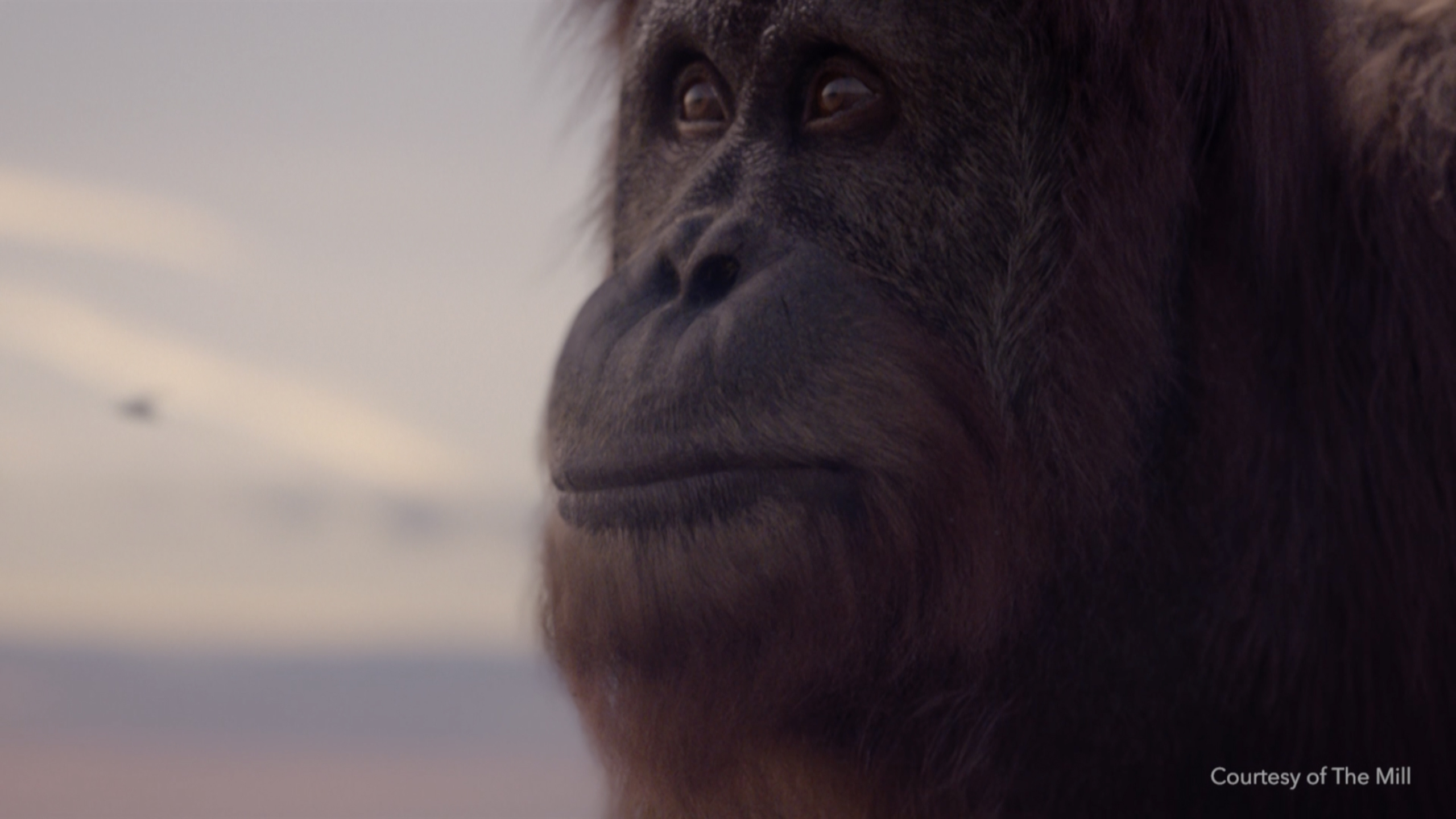 Still from the famous orangutan advert from Scottish and Southern Energy