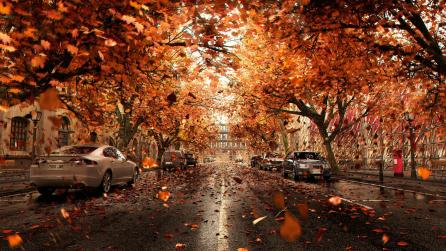 Ryan Wai Kin Lam orange leaves and cars